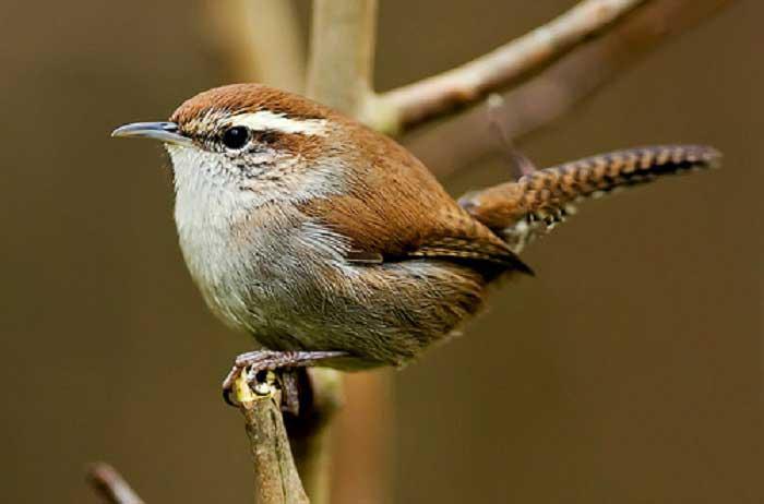 Próximos eventos & raquo; Comienzo de la serie Birding con Bob Quinn & raquo; NH Audubon